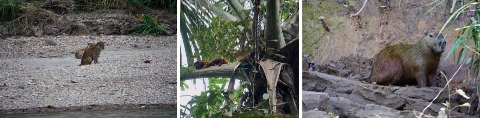 reisverslag Peru Tambopata Research Center