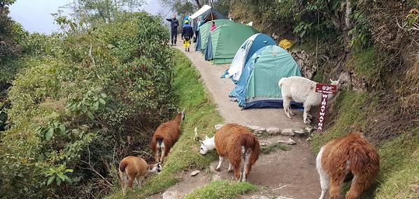 reisverslag Zuid-Peru