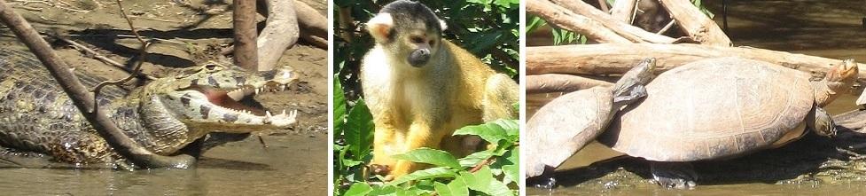 Bezoek de Amazone tijdens uw rondreis door Peru