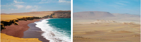 Tour Paracas Reservaat