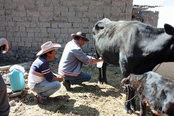 Reiservaring rondreis Peru Reynders